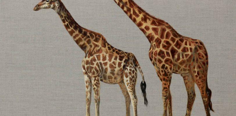Pair of Giraffe by Hannah Bruce